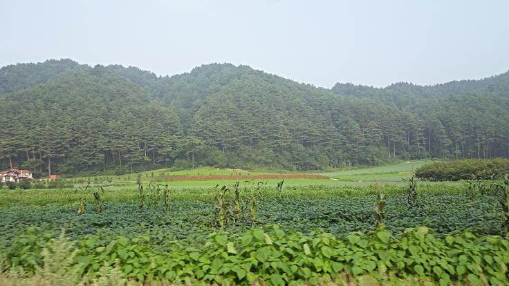 Gangwondo