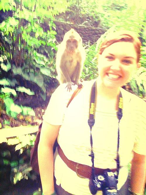 bali monkey