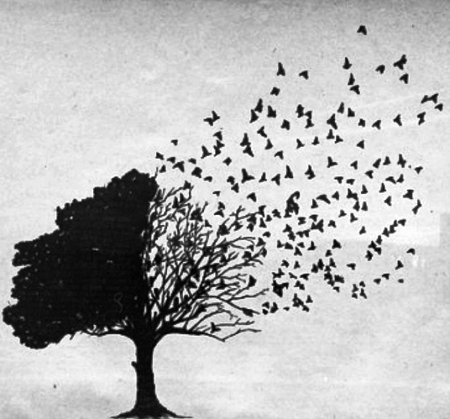 A tree saying goodbye to its leaves