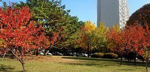 Korea during the fall