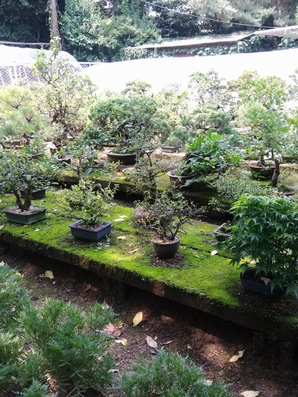 #bonsai #trees #garden #hiking #korea