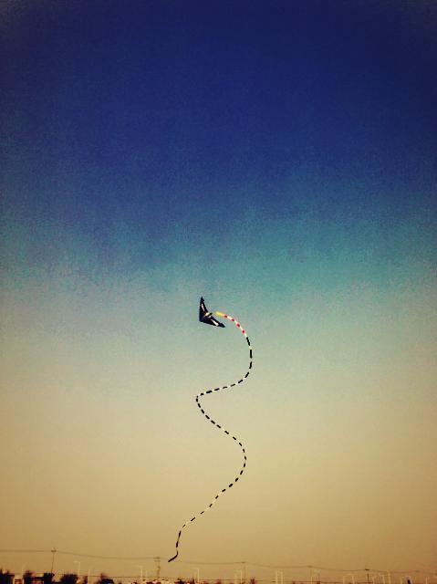 kite flying on the Han river