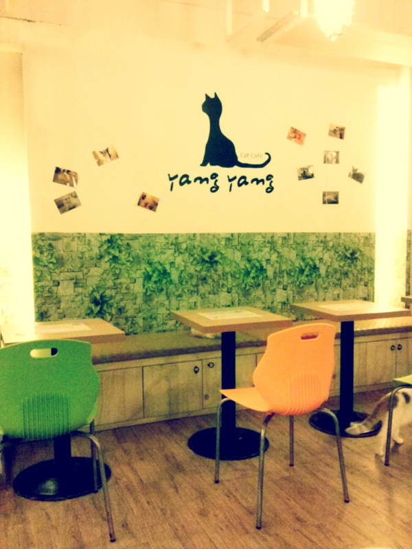 #cats #busan #cafe