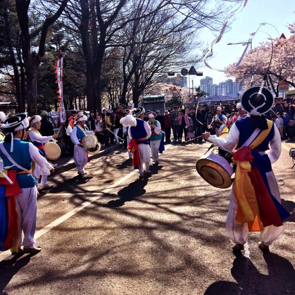 cherry blossoms springtime korea