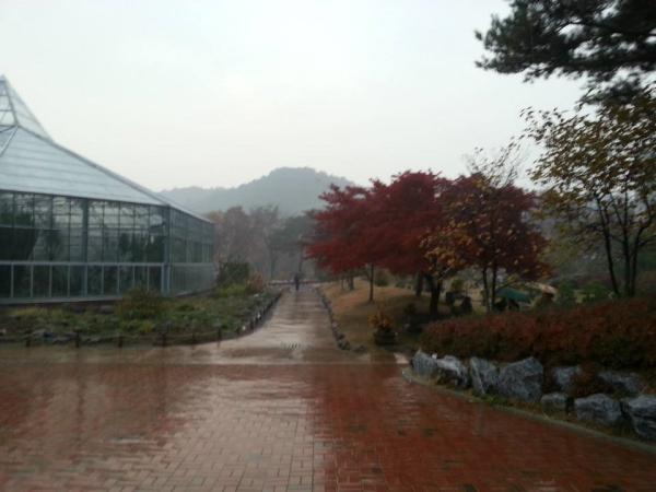 teach and travel korea, teach English in Asia, Teach Aclipse, teach asia, CDI