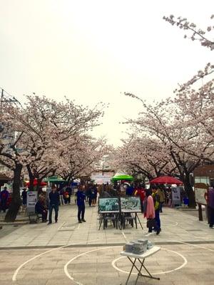 celebrating Spring in Korea