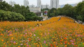 Olympic park flower hill.jpg