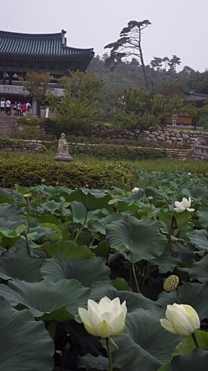 Lilypads and temples at Naksan Temple, Naksan Beach, Sokcho, Gangwondo
