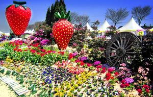 festivals in Korea