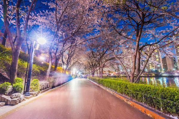 seokchon-lake-park-night-cherry-blossom-spring-seoul-south-korea_40171-117